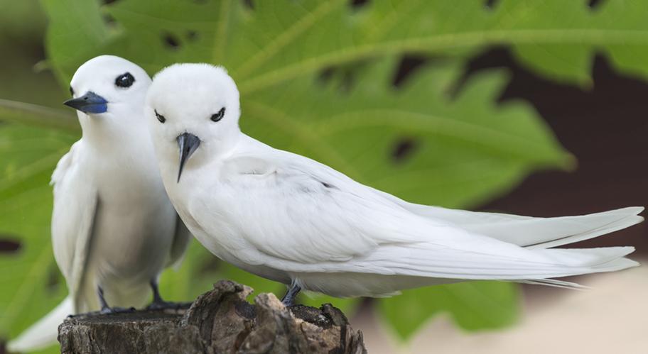Vögel Bird Island