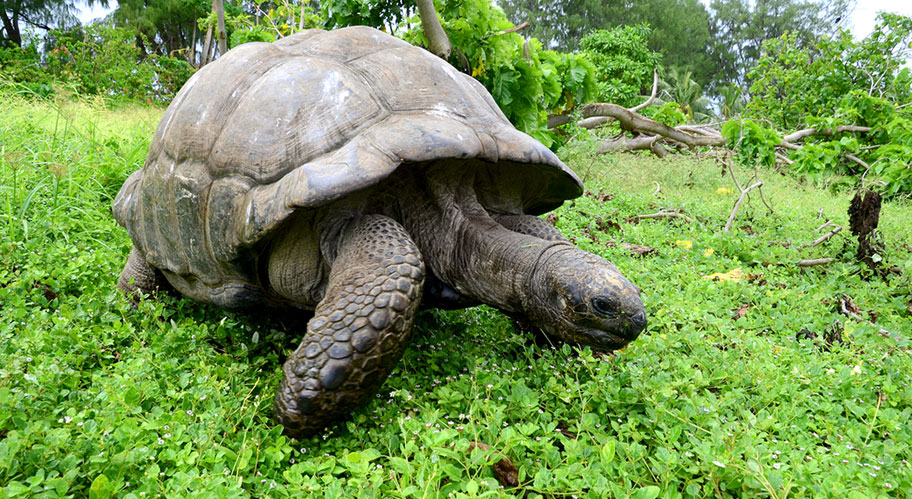 Schildkröte Bird Island