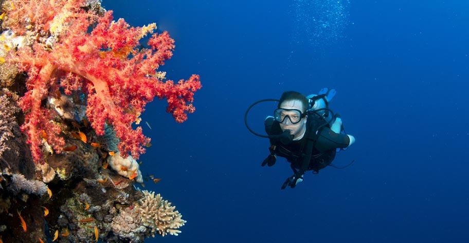 Tauchen auf den Seychellen Korallen