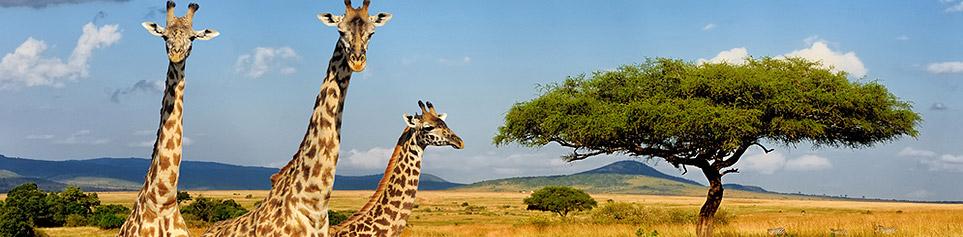 Kenya Seychellen Kombination